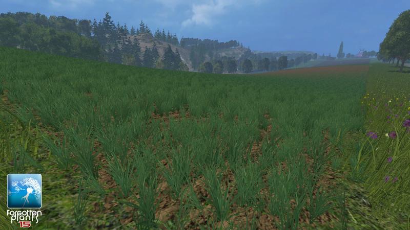 forgotten-plants-wheat-barley-v1-1_2